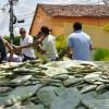 Agricultores de Poço Dantas ganham raquetes de palma com da Prefeitura. Veja!