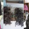 Humanidade: Meninas doam cabelo para ajudar paciente com câncer em São José de Piranhas.