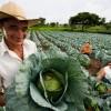 Agricultura Familiar: Como vender produtos para merenda escolar pelo PNAE.