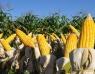 Governo antecipa benefício social para agricultores familiares e vai pagar R$ 73,3 milhões em abril
