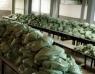 150 Toneladas: Prefeitura de Cajazeiras confirma início de mais uma etapa de distribuição do Kit de alimentação escolar
