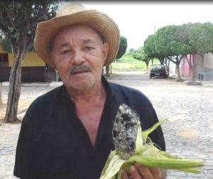 Agricultor fica espantado com espiga de milho e diz ten 71 anos e nunca vi isso